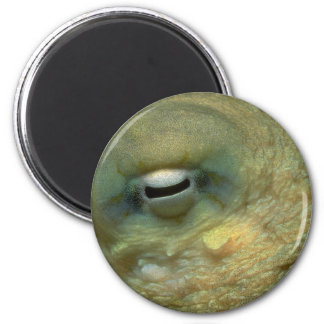 Beautiful Looking into the eye of a reef octopus 2 Inch Round Magnet