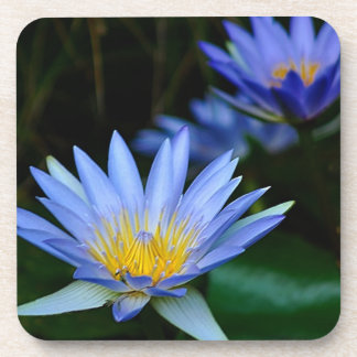 Beautiful lotus flowers and meaning beverage coaster