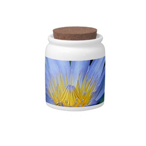 Beautiful lotus flowers and meaning candy jar