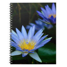 Beautiful lotus flowers and meaning notebook
