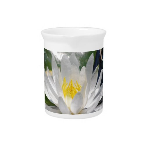 Beautiful lotus flowers and meaning beverage pitcher