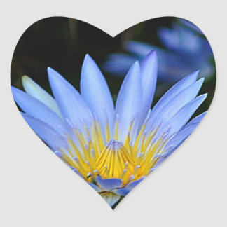 Beautiful lotus flowers and meaning heart sticker