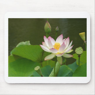 Beautiful Lotus Mouse Pad