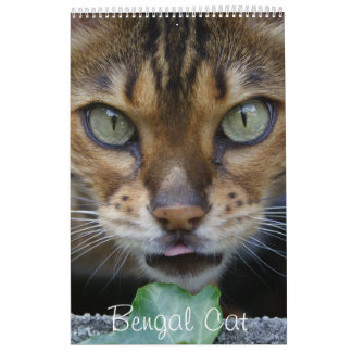 Beautiful Lovely Bengal Cats 2017 Calendar