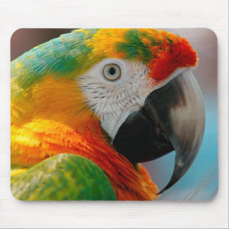 Beautiful Macaw Mouse Pad