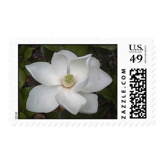 Beautiful Magnolia Postage Stamp