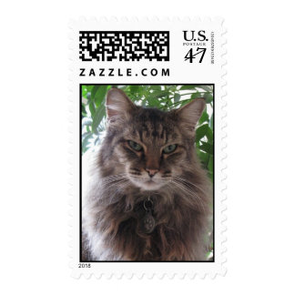 Beautiful Main Coon Cat Postage Stamps