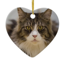Beautiful maine coon ceramic ornament