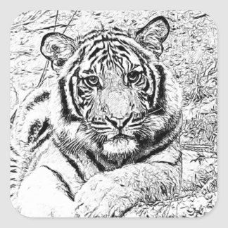 Beautiful Majestic Bengal Tiger Photo Sketch Square Sticker
