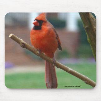 Beautiful Male Cardinal Mouse Pads