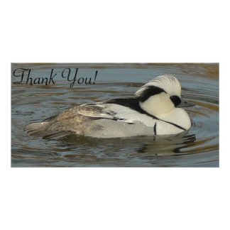 Beautiful Male Smew Floating in Water Card