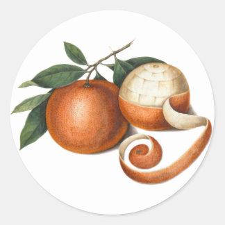 Beautiful Mandarin Oranges Antique Painting Classic Round Sticker