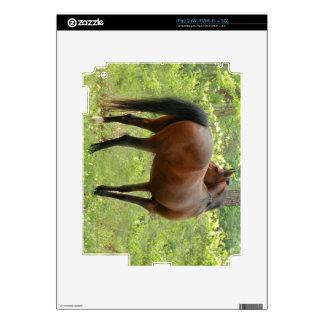 Beautiful Mare iPad 2 Skins