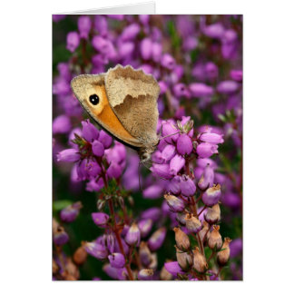 Beautiful Meadow Brown Butterfly - Greeting Card