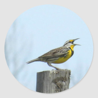 Beautiful meadowlark with yellow and gray markings classic round sticker
