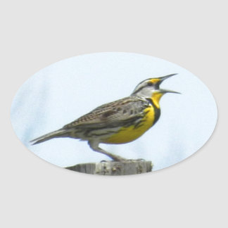 Beautiful meadowlark with yellow and gray markings oval sticker