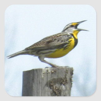 Beautiful meadowlark with yellow and gray markings square sticker