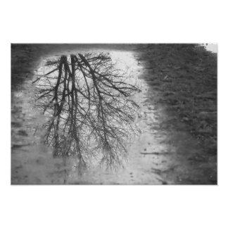 Beautiful mirrored tree photo print
