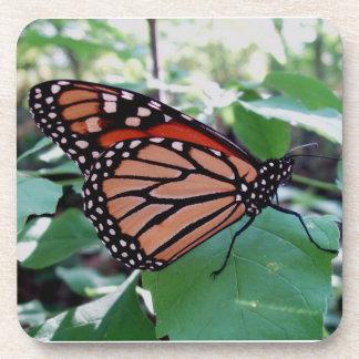 Beautiful Monarch Butterfly Coaster Set