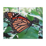 Beautiful Monarch Butterfly Gallery Wrapped Canvas