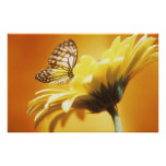 Beautiful Monarch Butterfly on a Flower Print