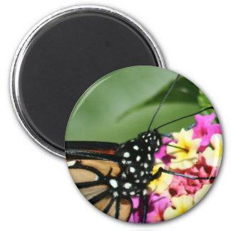 Beautiful Monarch Butterfly on Lantana Flower Fridge Magnets