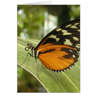 Beautiful Monarch Butterfly Photo Cards