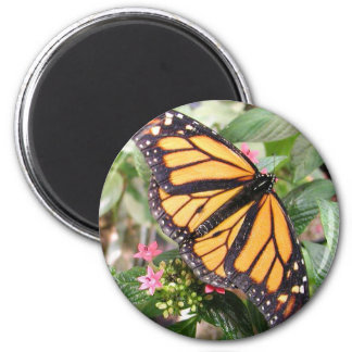 Beautiful Monarch Butterfly Photo Magnet