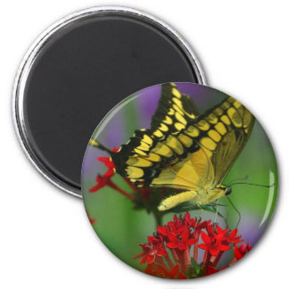 Beautiful Monarch Butterfly Photo Magnets
