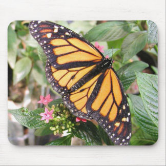 Beautiful Monarch Butterfly Photo Mouse Pad