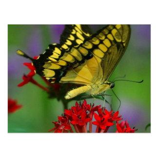 Beautiful Monarch Butterfly Photo Postcards