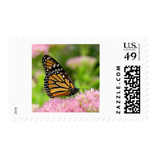 Beautiful Monarch Butterfly Postage