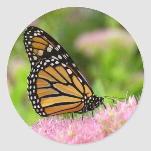 Beautiful Monarch Butterfly Round Sticker