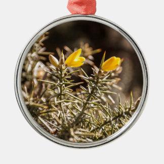 beautiful moorland gorse flower round metal christmas ornament