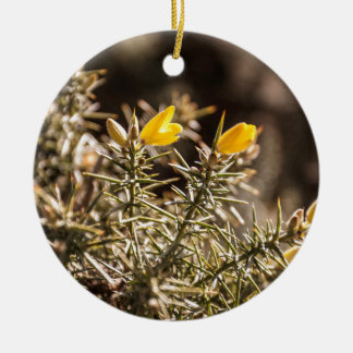 beautiful moorland gorse flower Double-Sided ceramic round christmas ornament