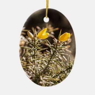 beautiful moorland gorse flower Double-Sided oval ceramic christmas ornament