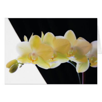 Beautiful Morning Orchids Card