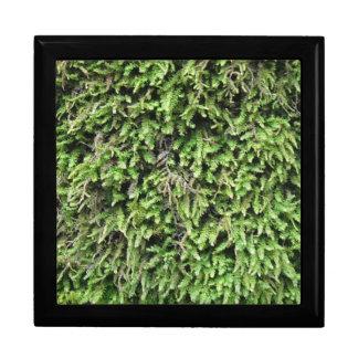 Beautiful moss pattern tile box