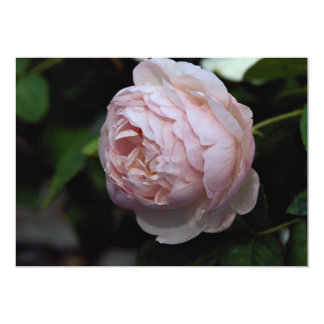 Beautiful Moss Rose 'Alfred de Dalmas' Personalized Announcements