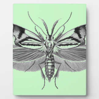 Beautiful moth pencil drawing photo plaques