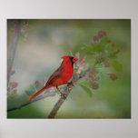Beautiful Mr. Cardinal Poster