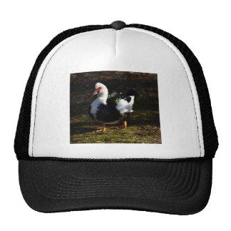 Beautiful Muscovy Drakelet Trucker Hat
