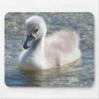 Beautiful Mute Swan Duckling Mouse Pad