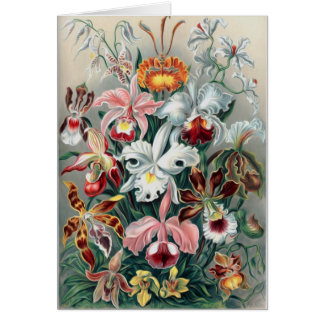 Beautiful Nature - Orchids Greeting Card