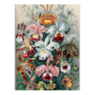 Beautiful Nature - Orchids Postcard