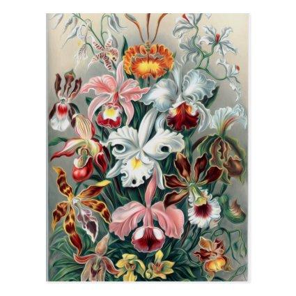 Beautiful Nature - Orchids Postcards