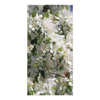 Beautiful Nature Photo Of White Apple Blossom Customized Photo Card