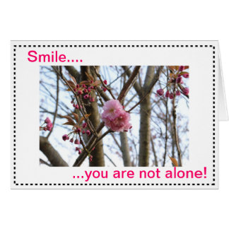 Beautiful nature pictures to decorate your item card