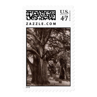 Beautiful Old Yew in Church Yard Cemetery Stamps