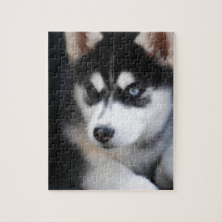 Beautiful One Blue Eye Siberian Husky 2 Jigsaw Puzzle